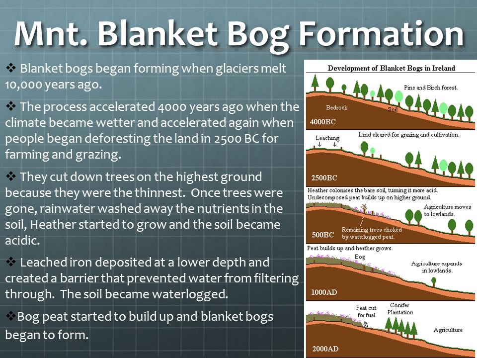 Mnt. Blanket Bog Formation