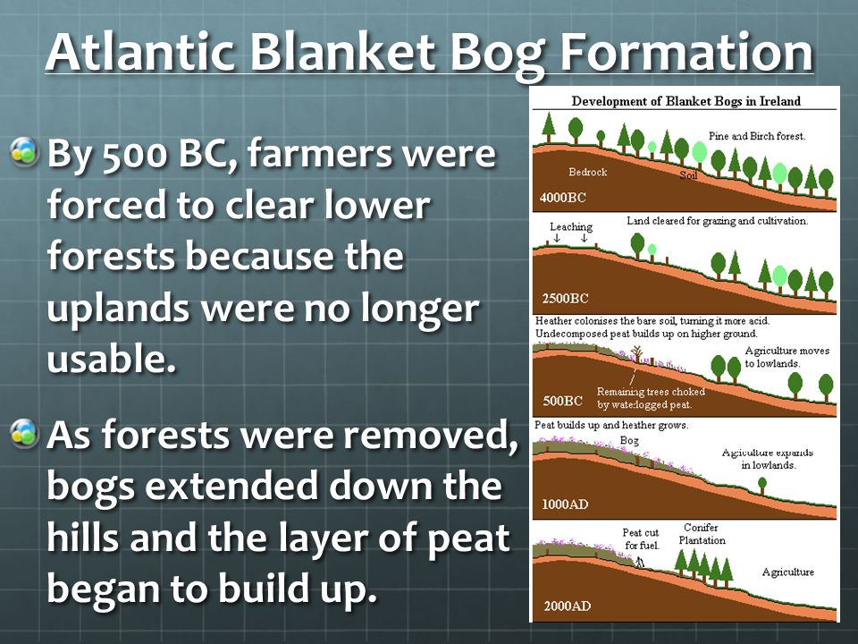Atlantic Blanket Bog Formation
