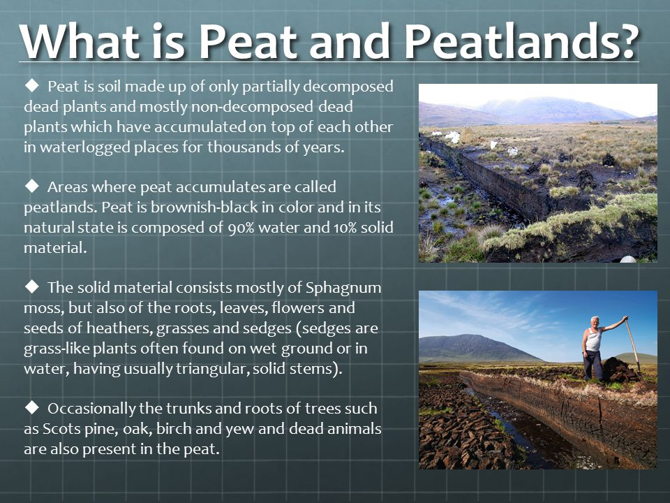 What is Peat and Peatlands