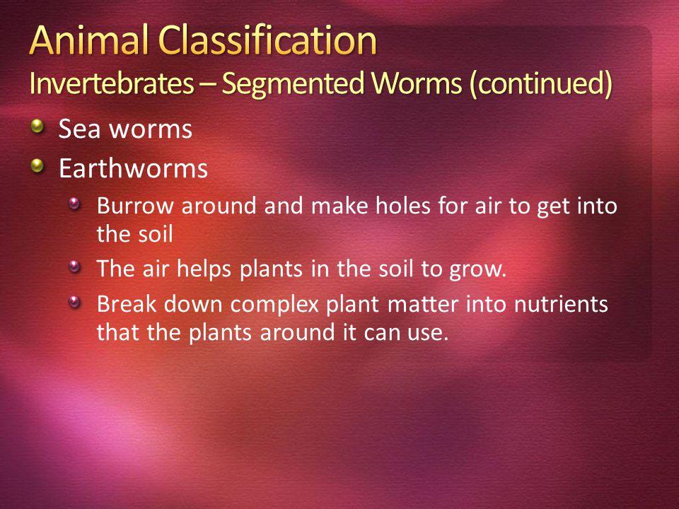 Animal Classification Invertebrates – Segmented Worms (continued)