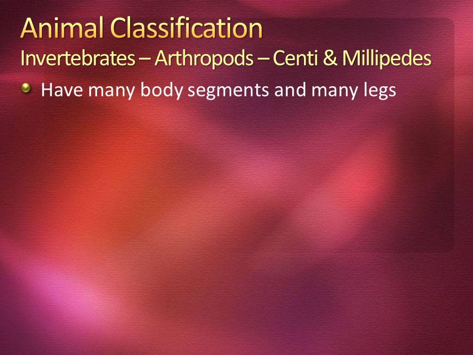 Animal Classification Invertebrates – Arthropods – Centi & Millipedes