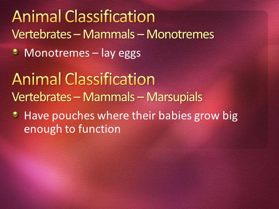 Animal Classification Vertebrates – Mammals – Monotremes