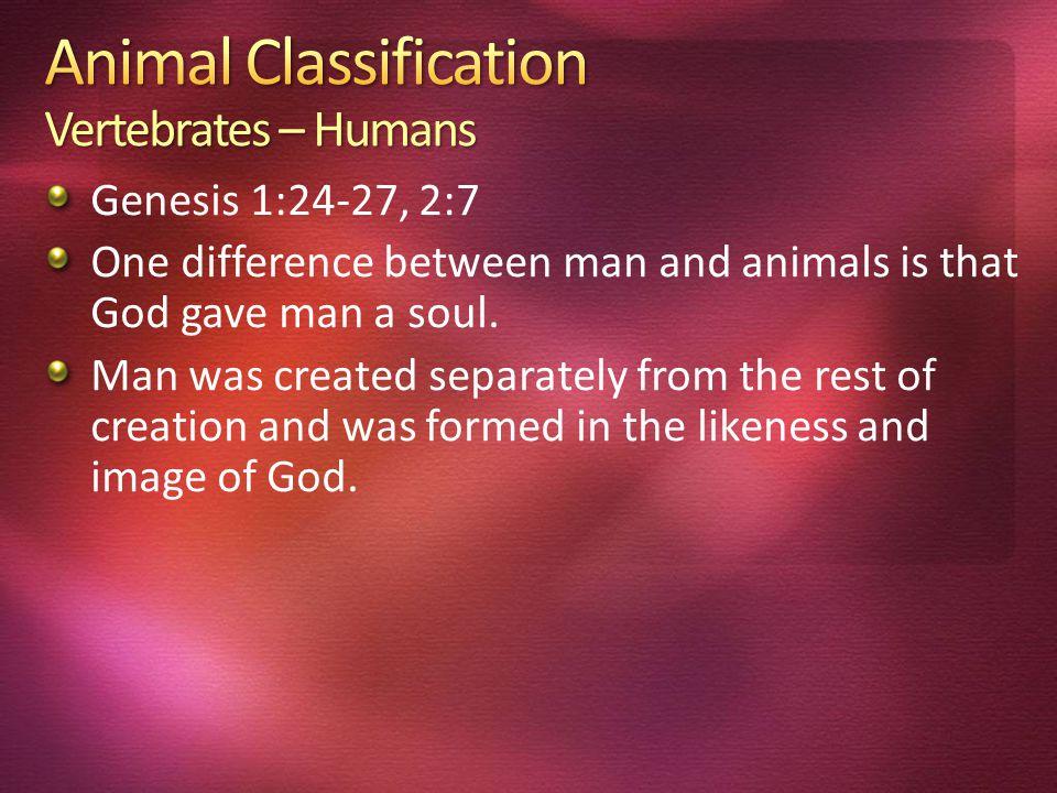 Animal Classification Vertebrates – Humans