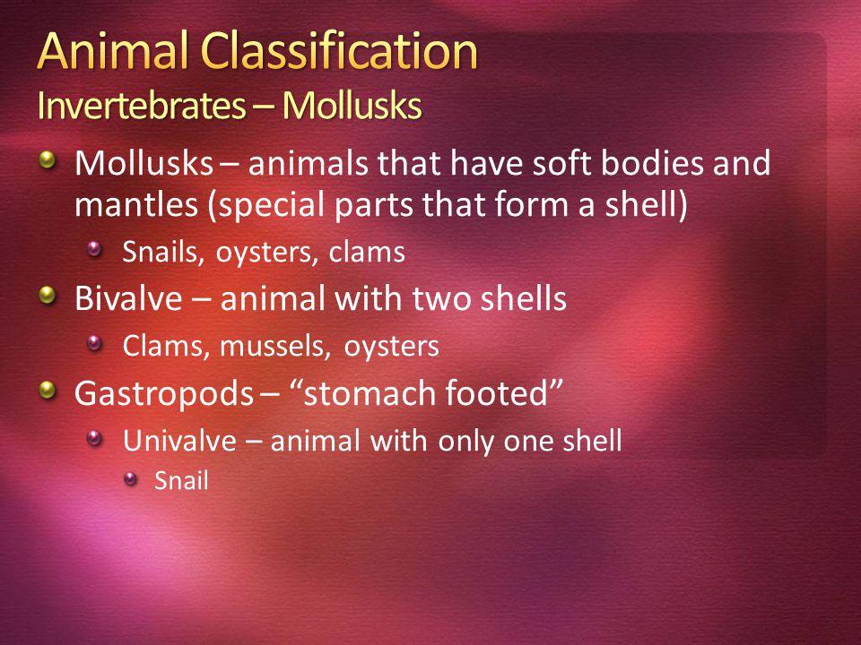 Animal Classification Invertebrates – Mollusks
