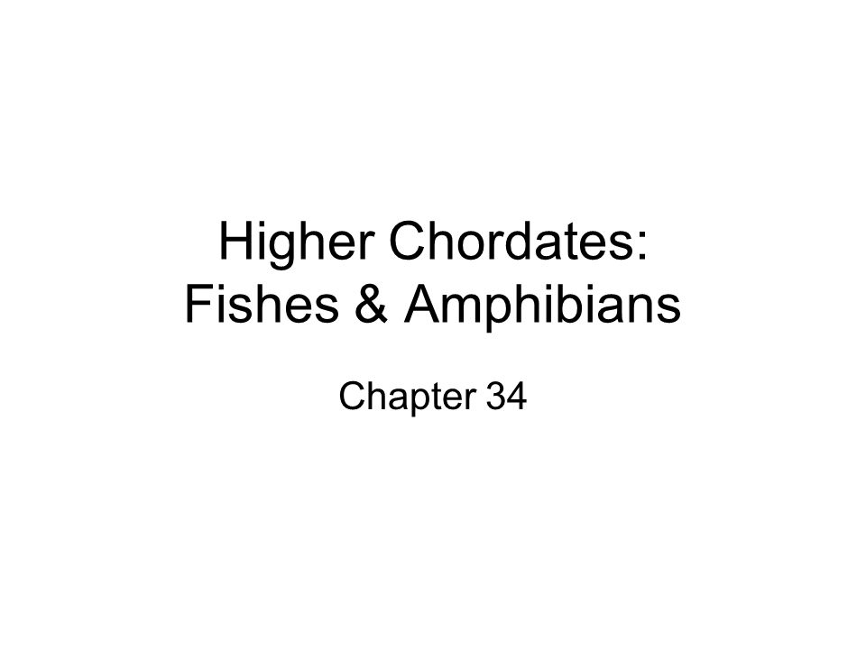 Higher Chordates: Fishes & Amphibians