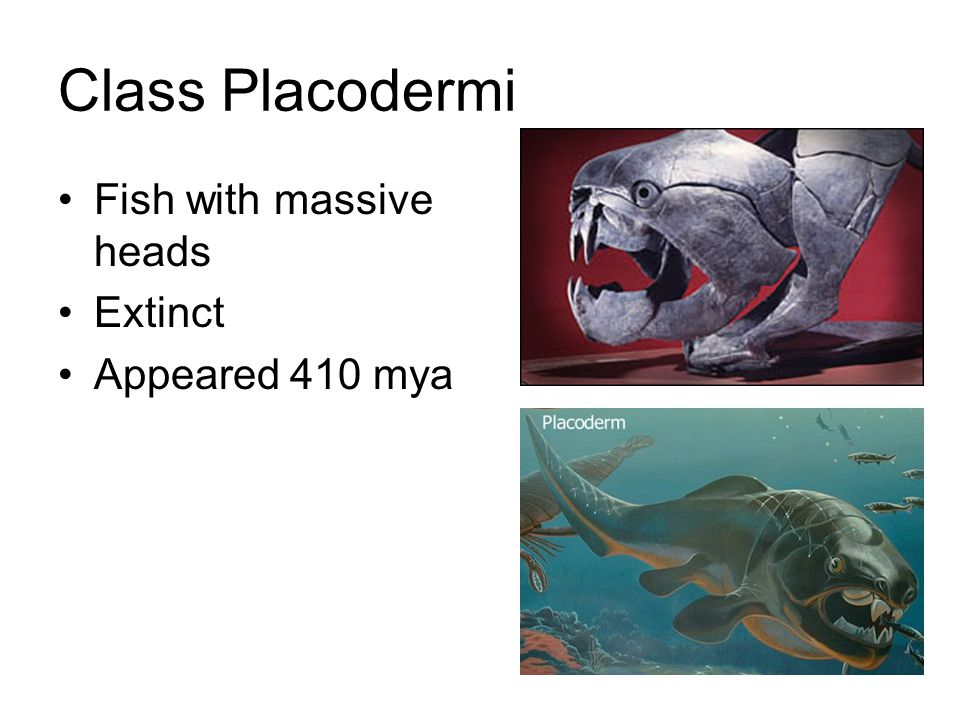 Class Placodermi Fish with massive heads Extinct Appeared 410 mya