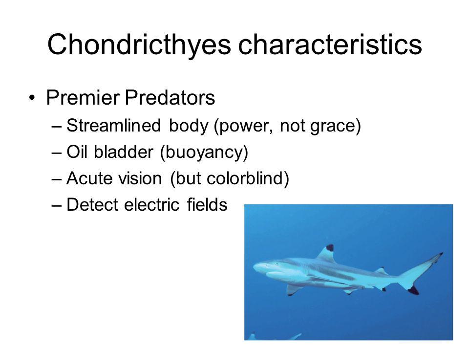 Chondricthyes characteristics