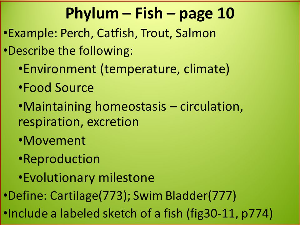 Phylum – Fish – page 10 Environment (temperature, climate) Food Source