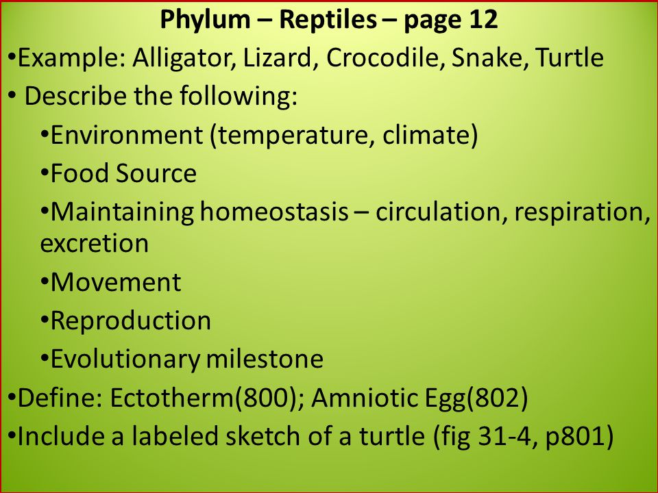 Phylum – Reptiles – page 12