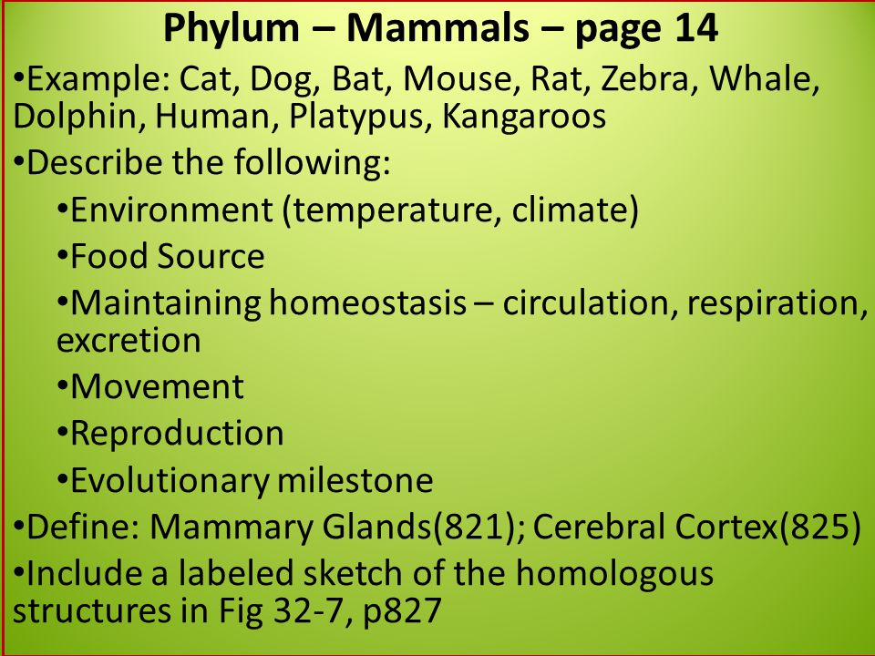 Phylum – Mammals – page 14 Example: Cat, Dog, Bat, Mouse, Rat, Zebra, Whale, Dolphin, Human, Platypus, Kangaroos.