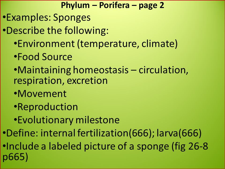 phylum porifera essay Phylum essay submitted by: below is an essay on phylum from anti essays, your source for research papers  sponges are animals of the phylum porifera.