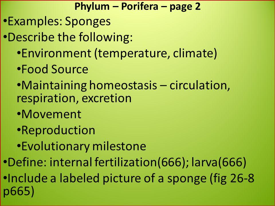 Phylum – Porifera – page 2
