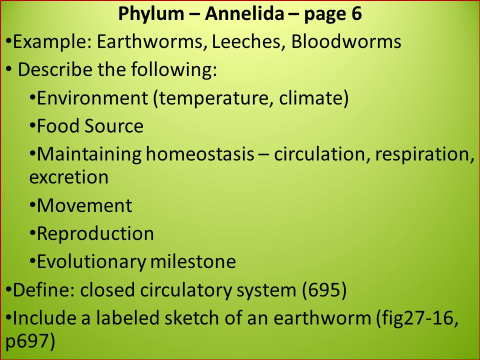 Phylum – Annelida – page 6
