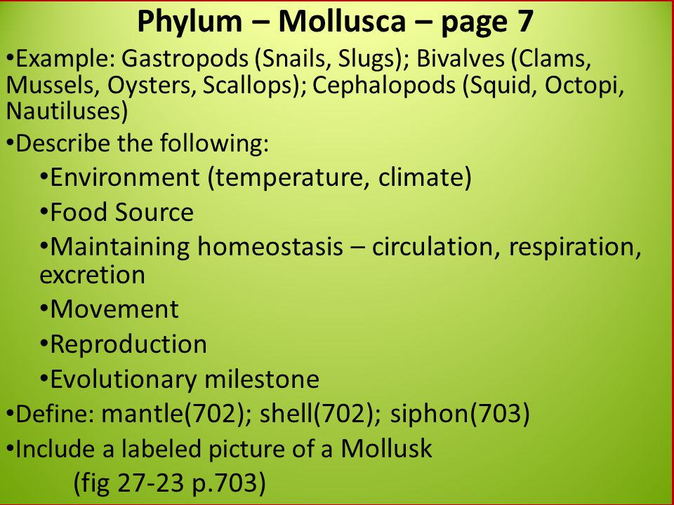 Phylum – Mollusca – page 7