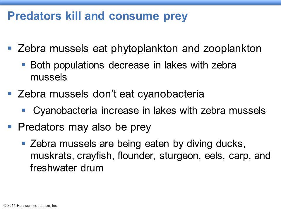 Predators kill and consume prey
