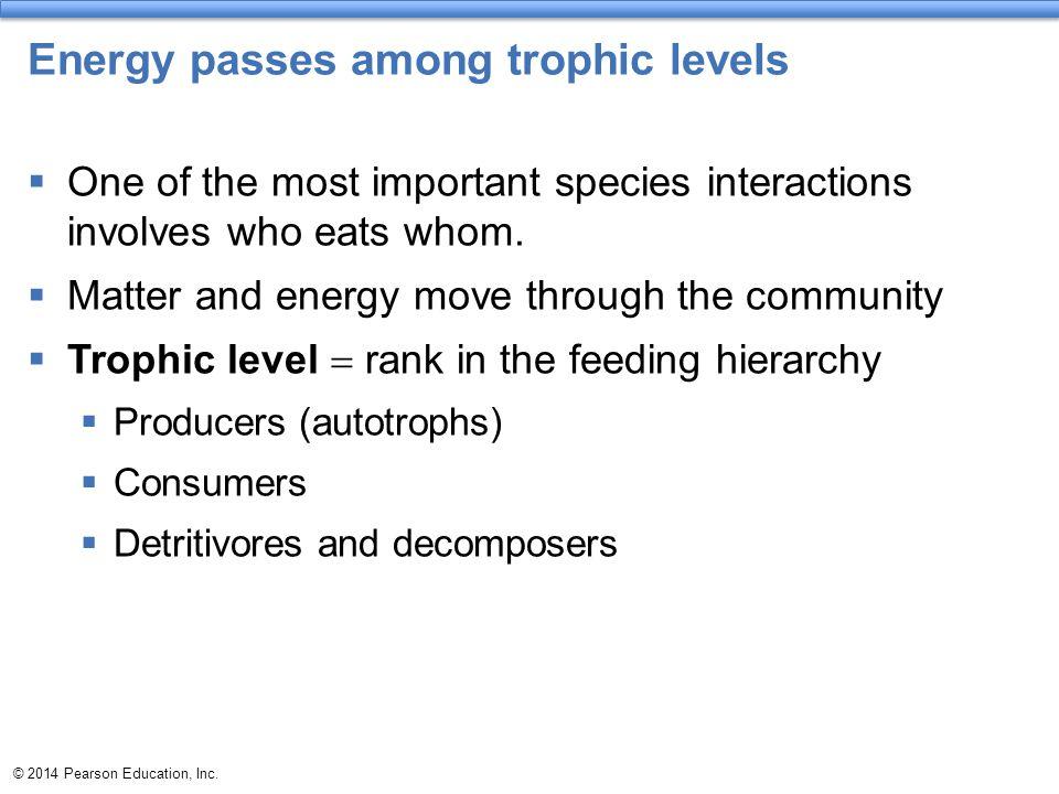 Energy passes among trophic levels
