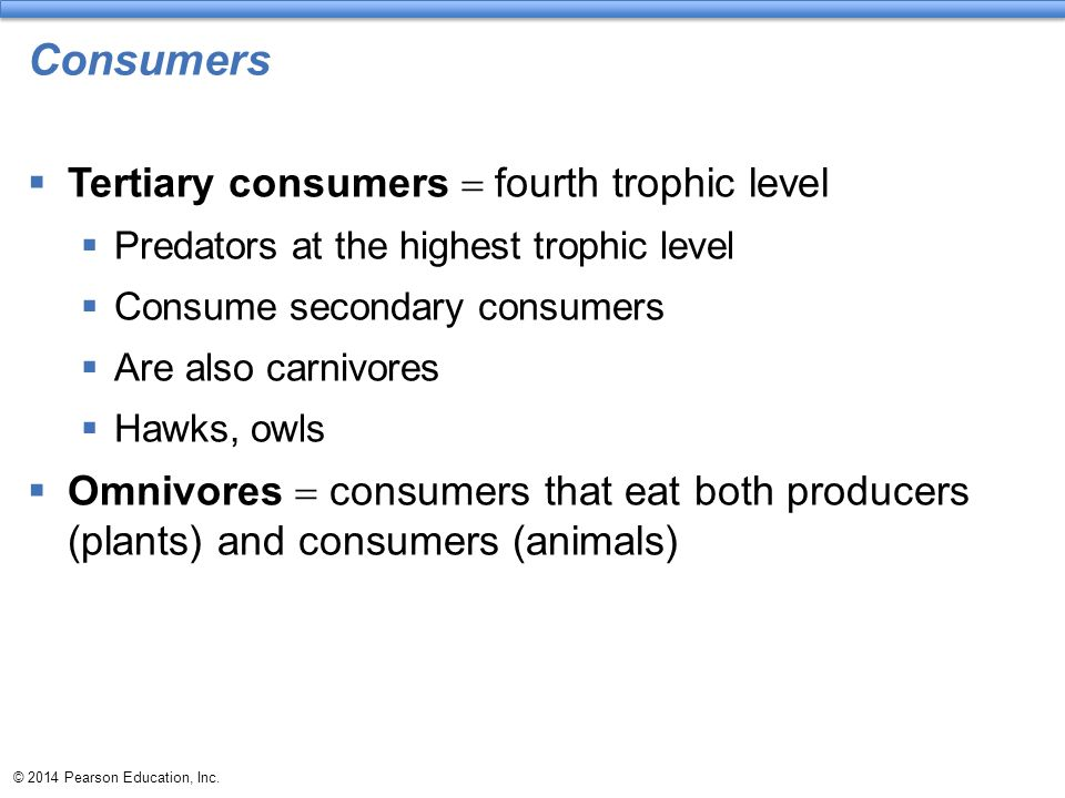Consumers Tertiary consumers = fourth trophic level