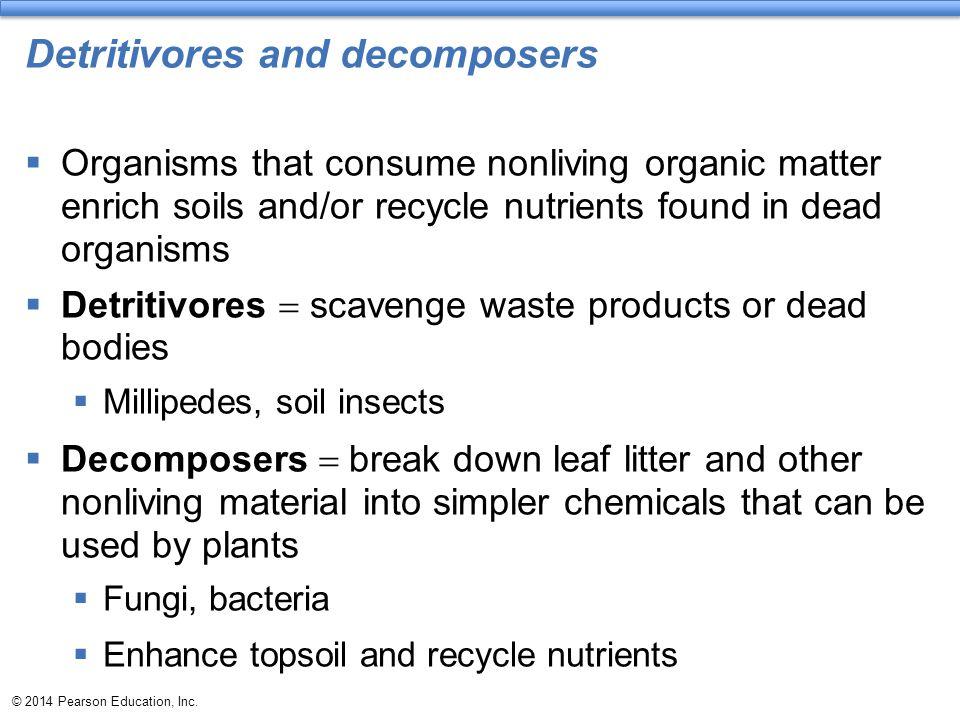 Detritivores and decomposers