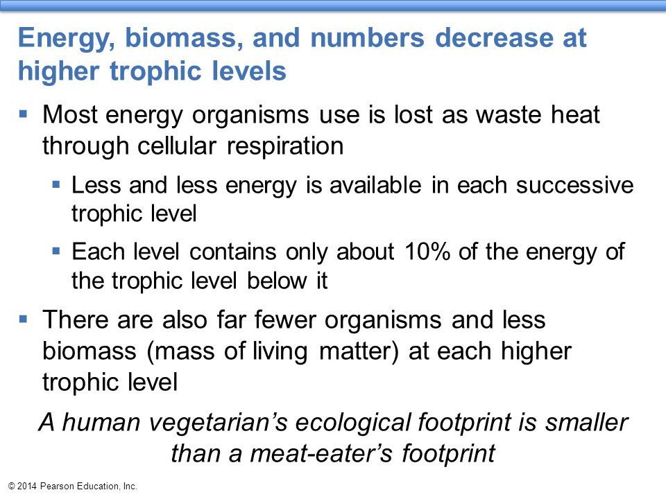 Energy, biomass, and numbers decrease at higher trophic levels