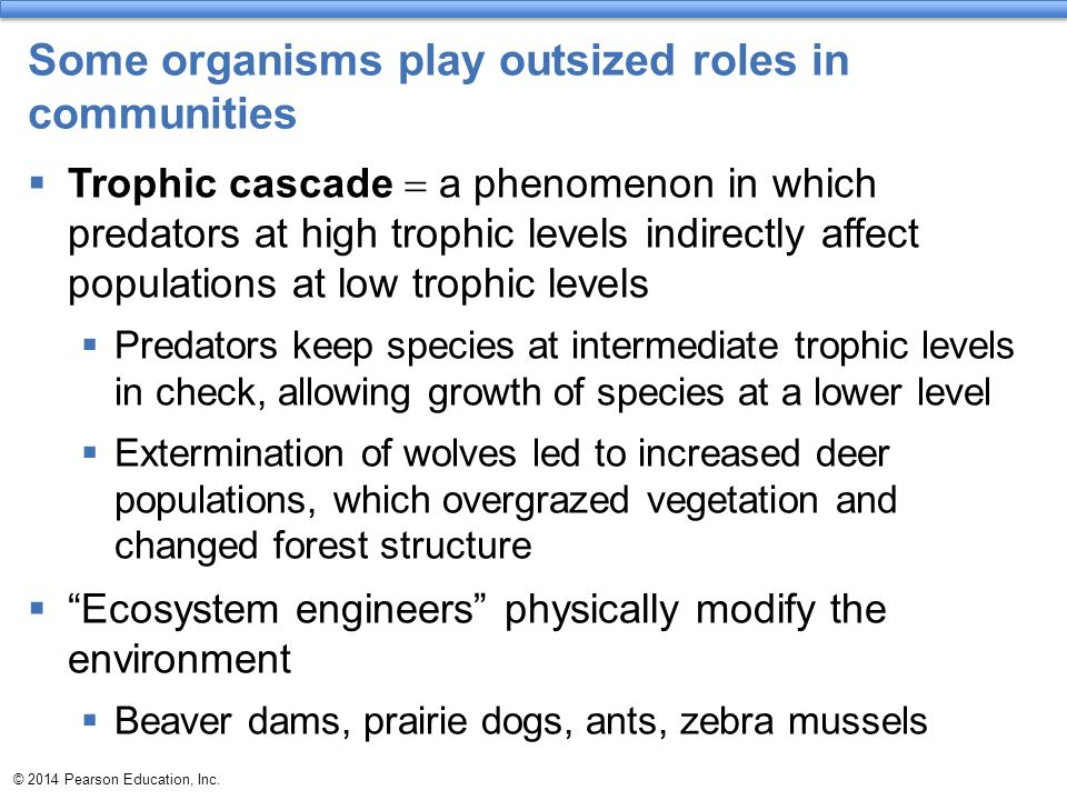 Some organisms play outsized roles in communities