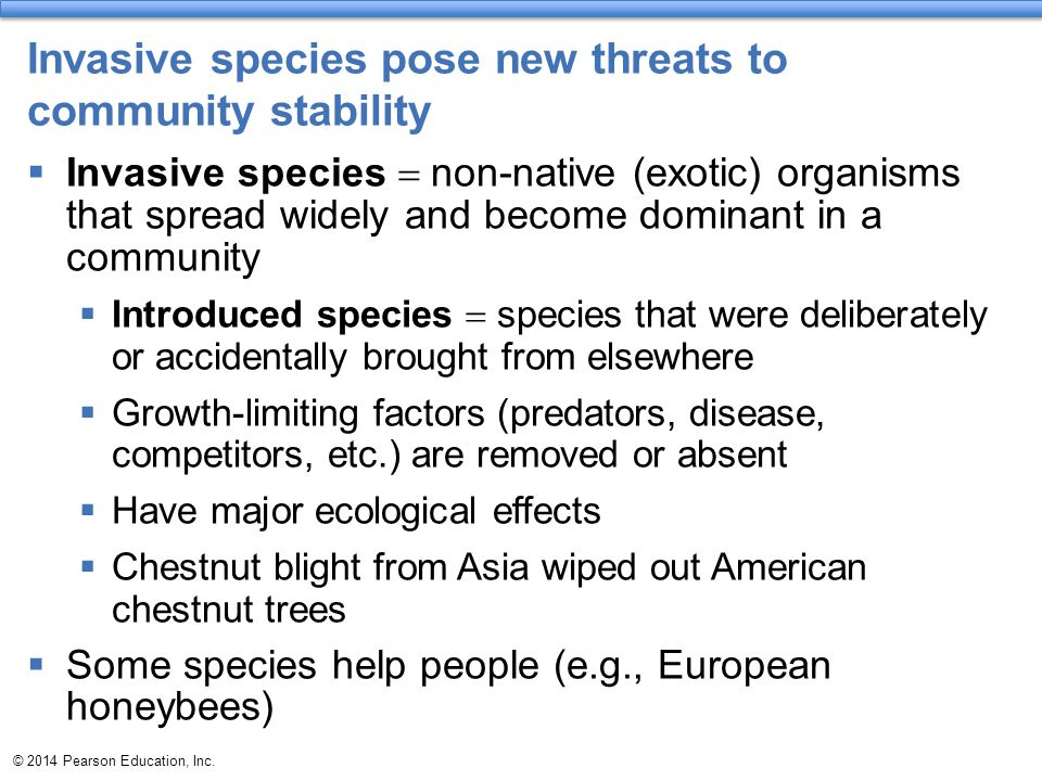 Invasive species pose new threats to community stability