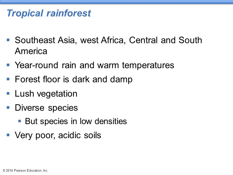 Tropical rainforest Southeast Asia, west Africa, Central and South America. Year-round rain and warm temperatures.