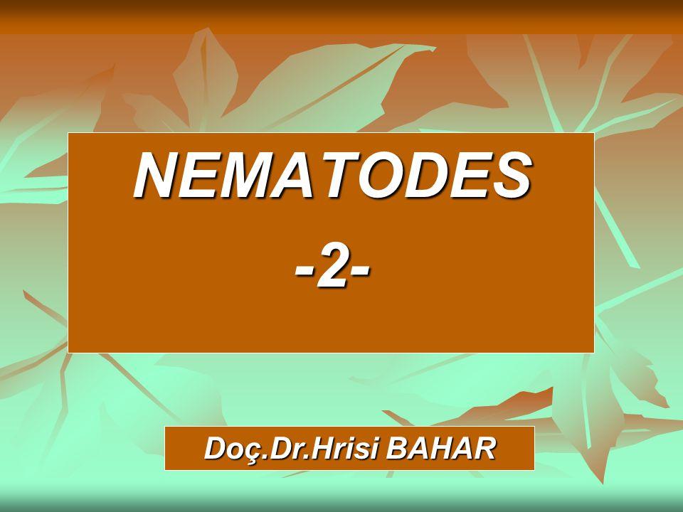 NEMATODES -2- Doç.Dr.Hrisi BAHAR
