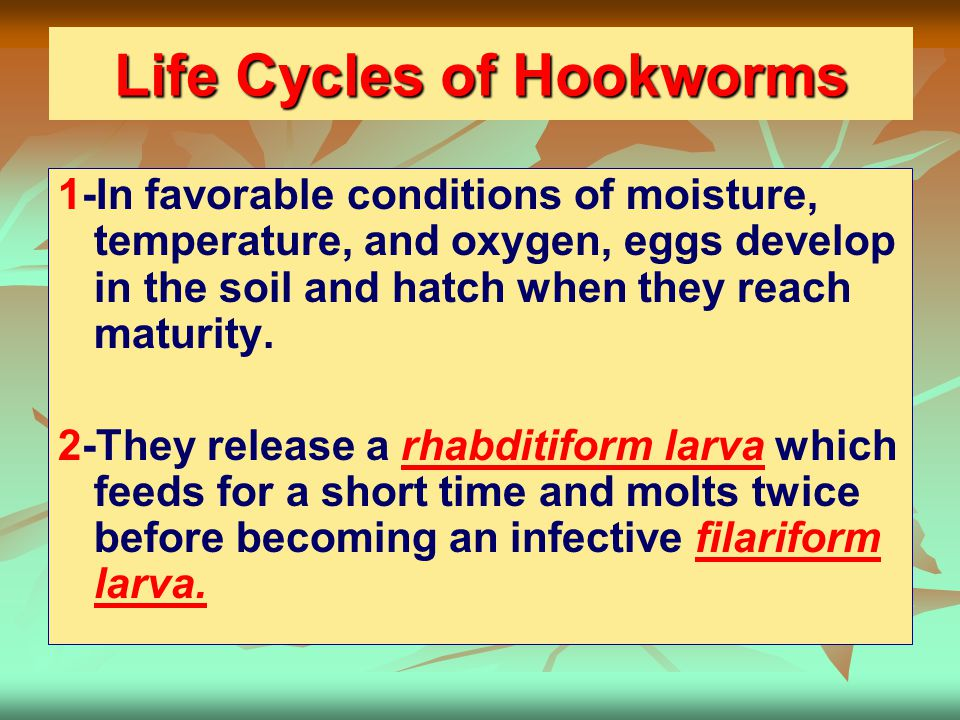 Life Cycles of Hookworms