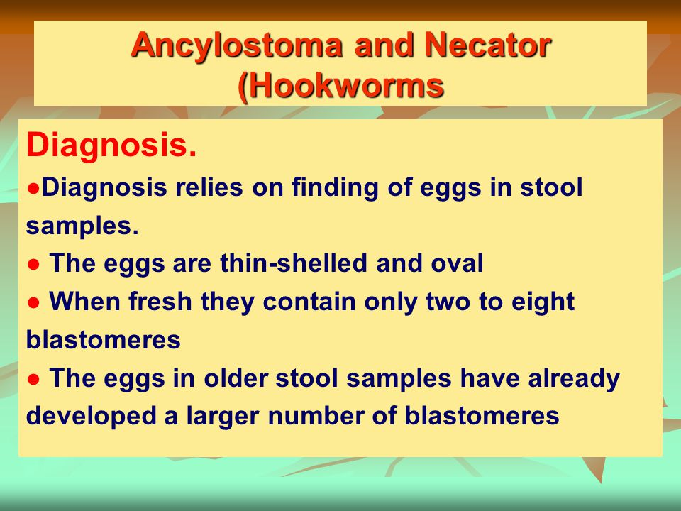 Ancylostoma and Necator (Hookworms
