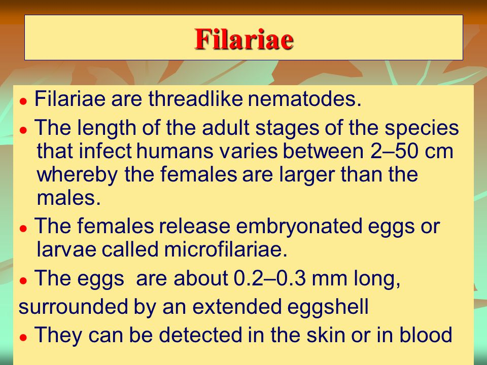 Filariae surrounded by an extended eggshell