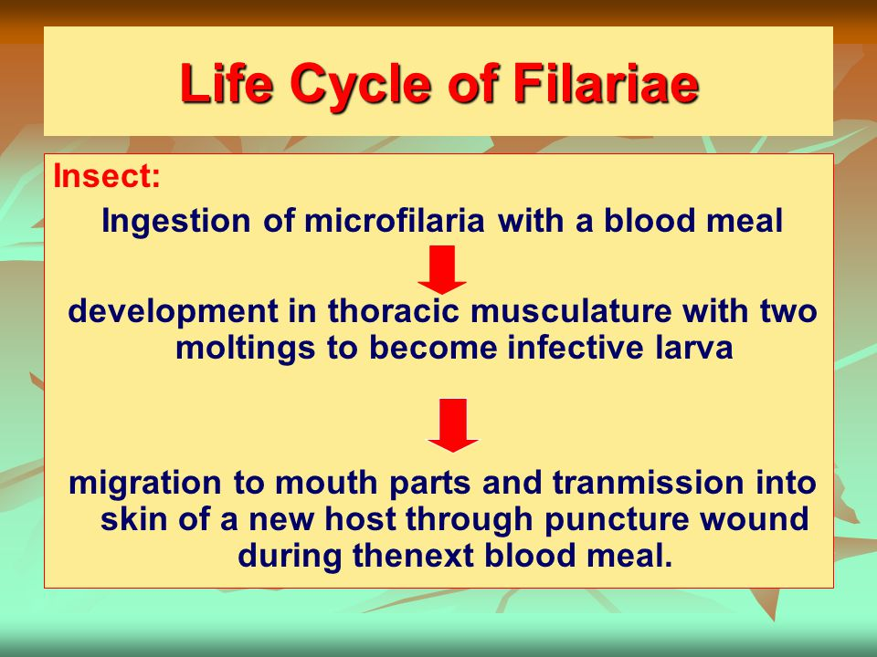 Ingestion of microfilaria with a blood meal