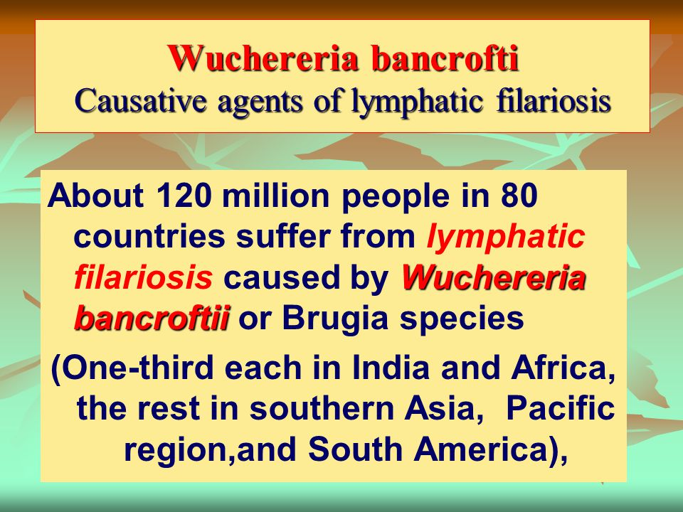 Wuchereria bancrofti Causative agents of lymphatic filariosis