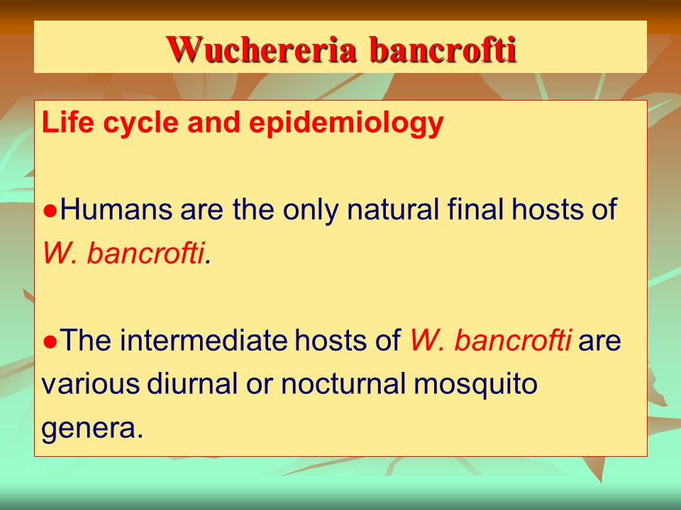 Wuchereria bancrofti Life cycle and epidemiology
