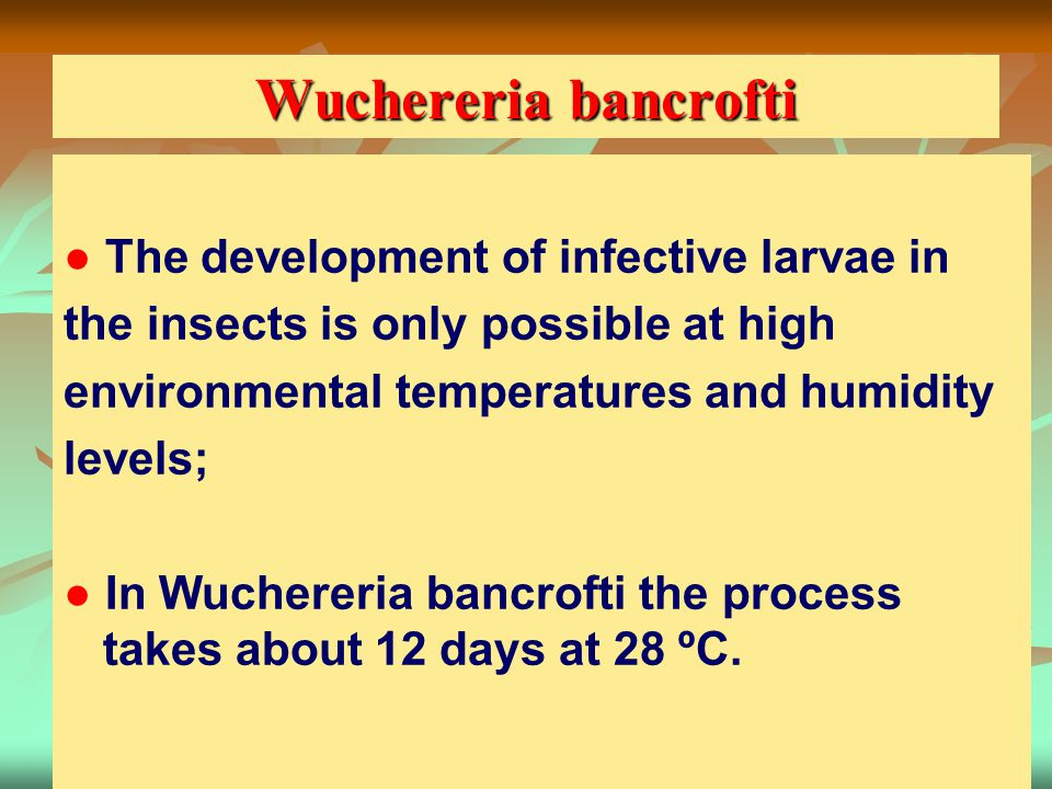 Wuchereria bancrofti ● The development of infective larvae in