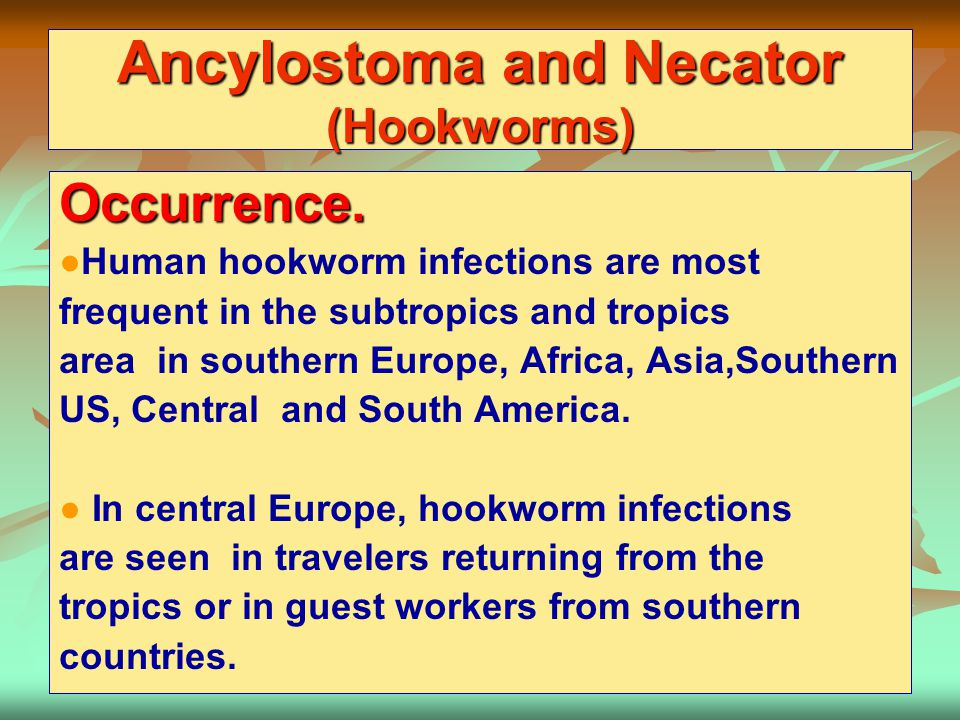 Ancylostoma and Necator (Hookworms)