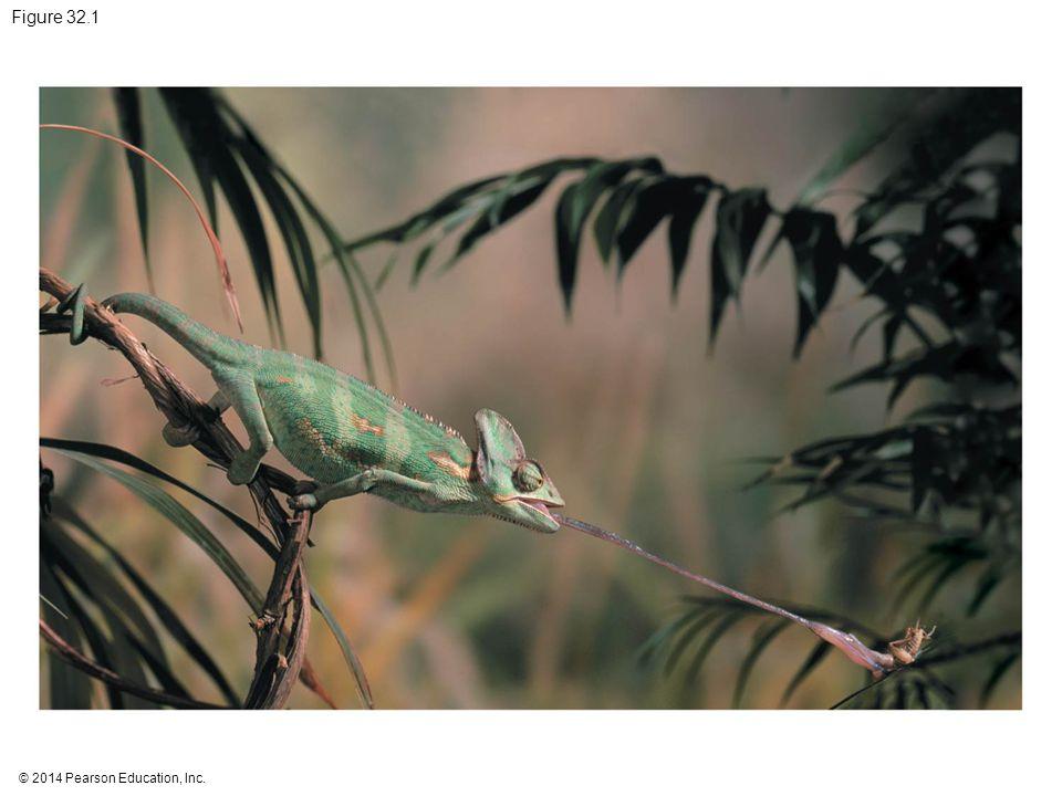 Figure 32.1 Figure 32.1 What adaptations make a chameleon a fearsome predator
