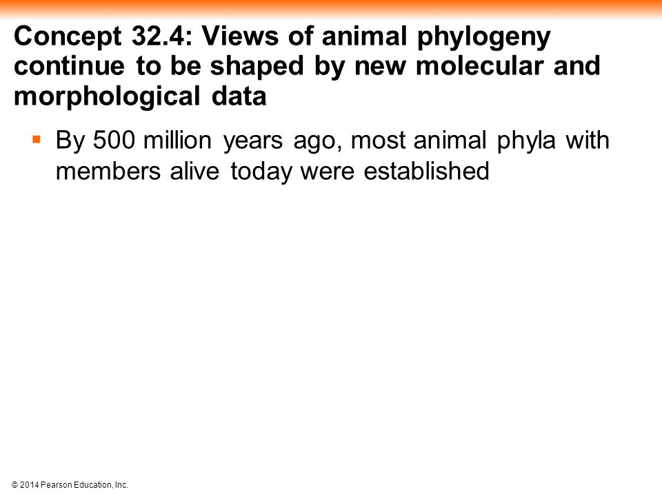 Concept 32.4: Views of animal phylogeny continue to be shaped by new molecular and morphological data
