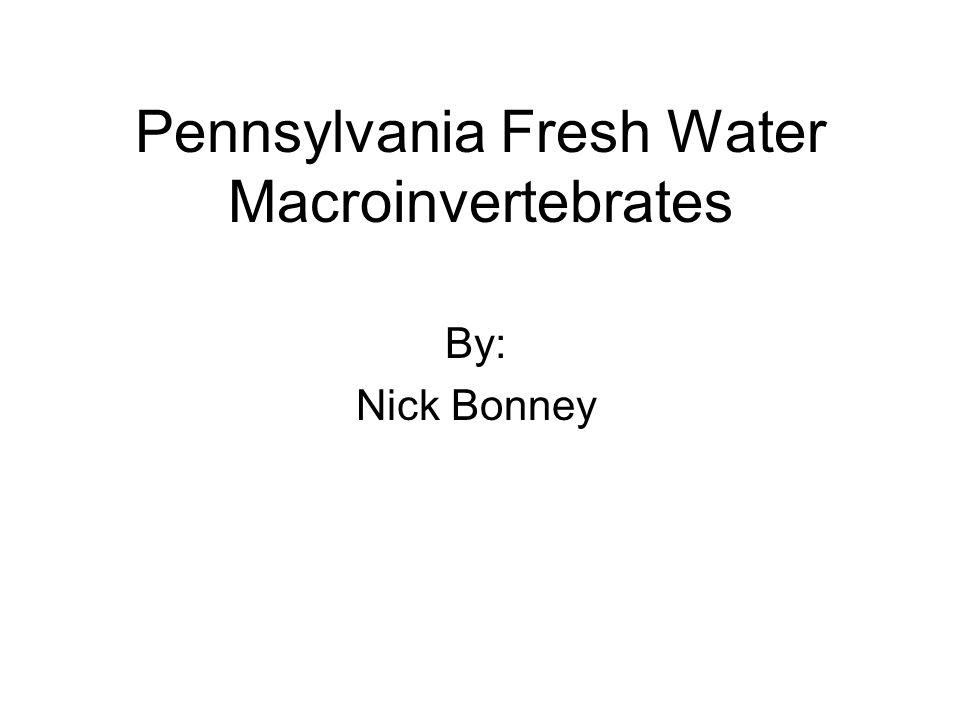 Pennsylvania Fresh Water Macroinvertebrates
