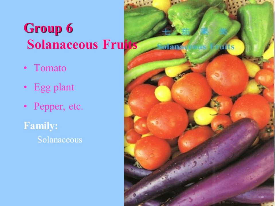 Group 6 Solanaceous Fruits