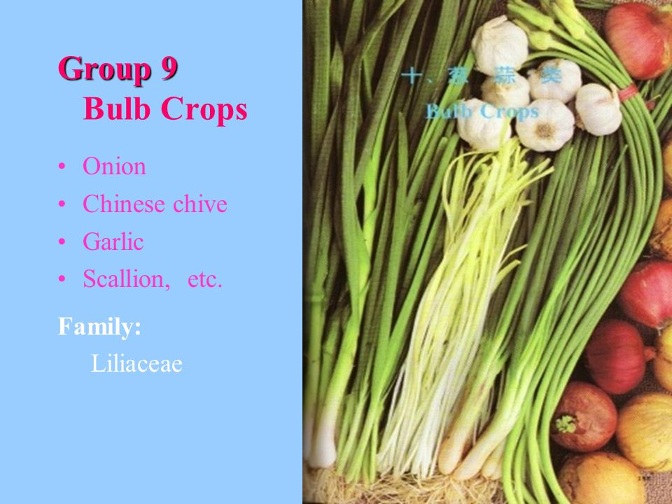 Group 9 Bulb Crops Onion Chinese chive Garlic Scallion, etc. Family: