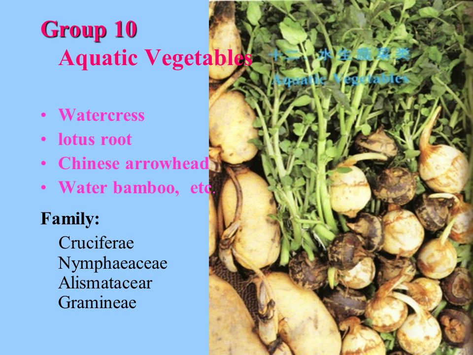 Group 10 Aquatic Vegetables