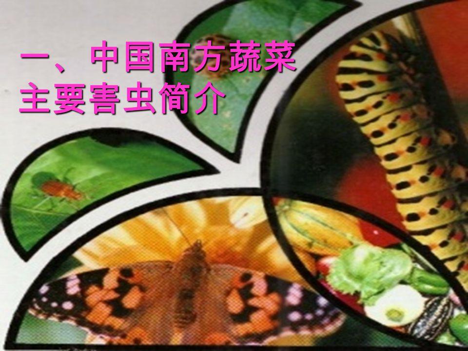 一、中国南方蔬菜 主要害虫简介