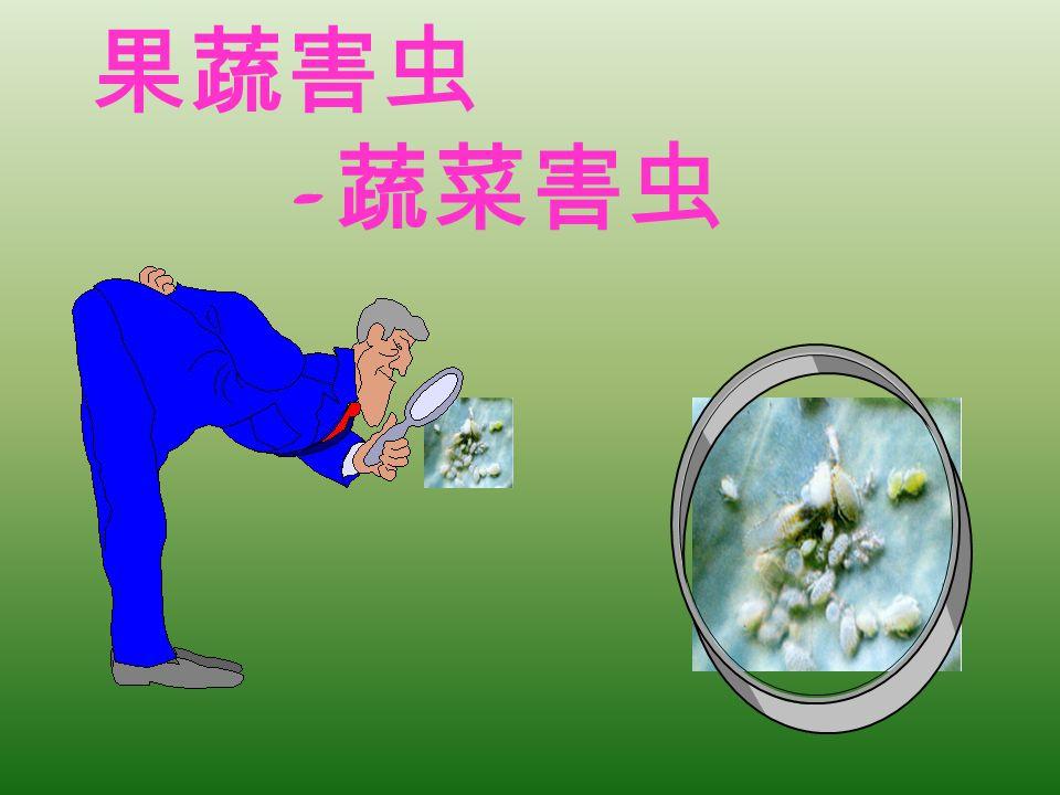 果蔬害虫 -蔬菜害虫