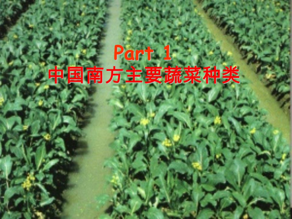 Part 1 中国南方主要蔬菜种类