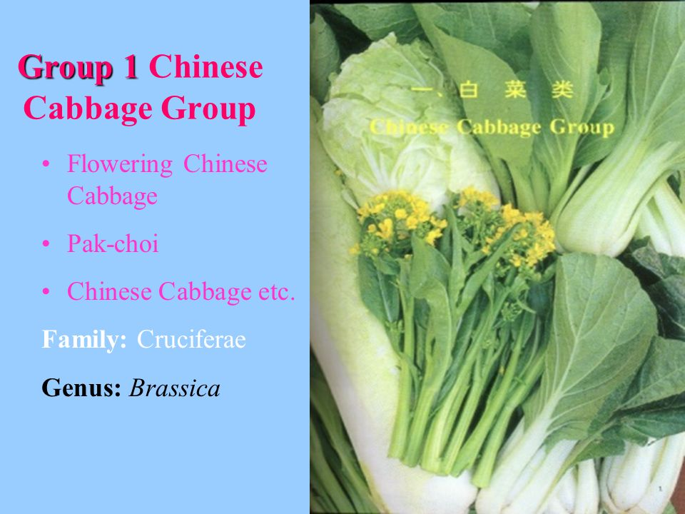 Group 1 Chinese Cabbage Group
