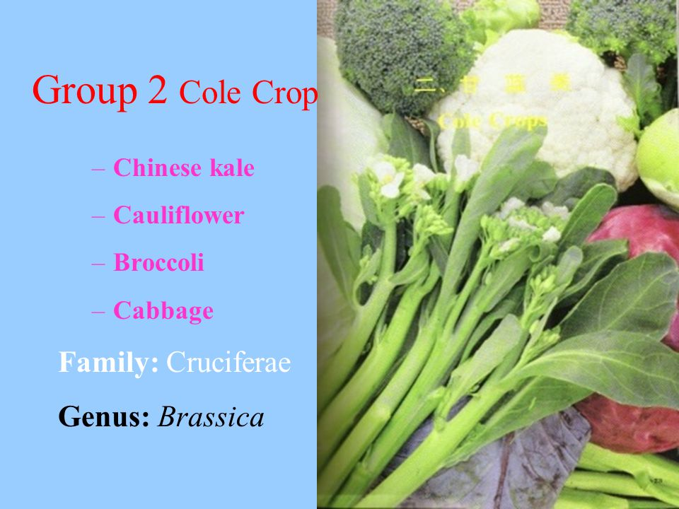 Group 2 Cole Crop Family: Cruciferae Genus: Brassica Chinese kale