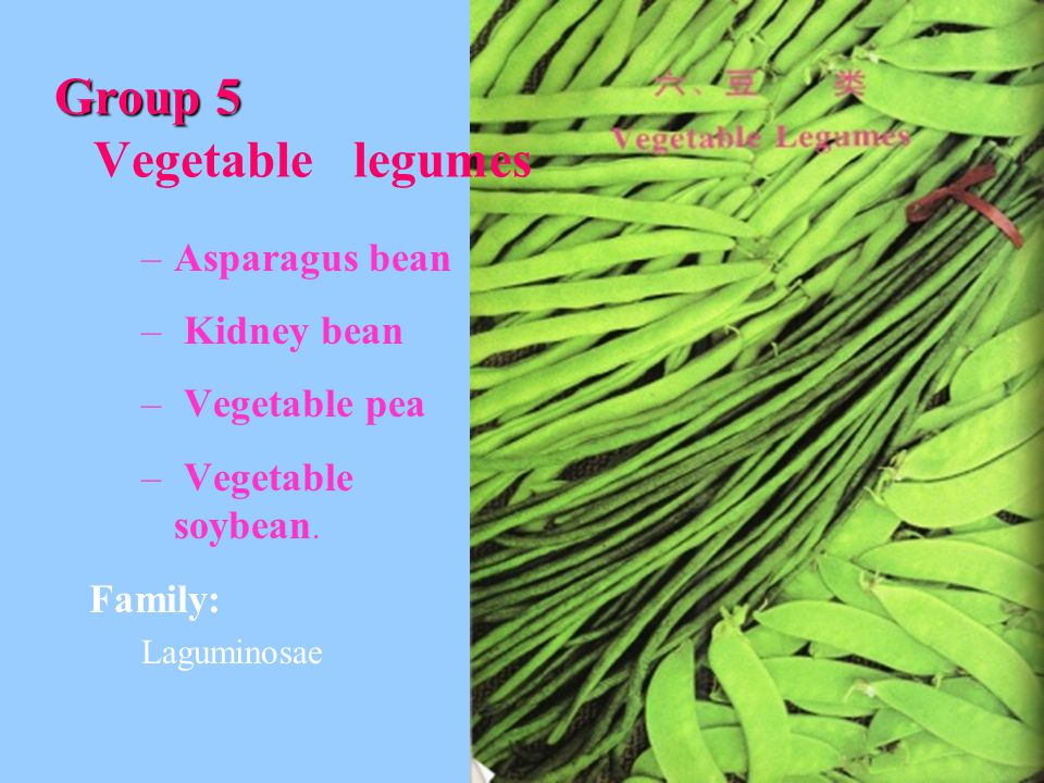 Group 5 Vegetable legumes