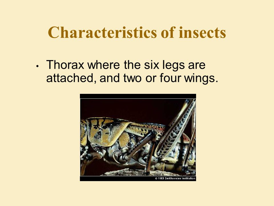 Characteristics of insects