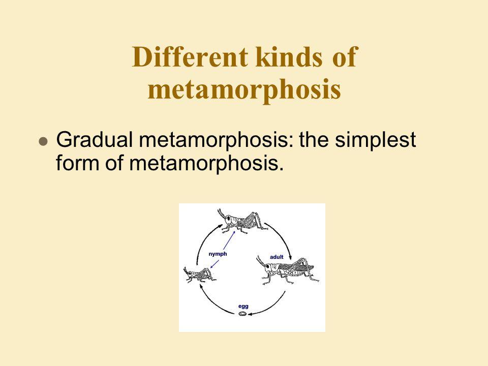 Different kinds of metamorphosis