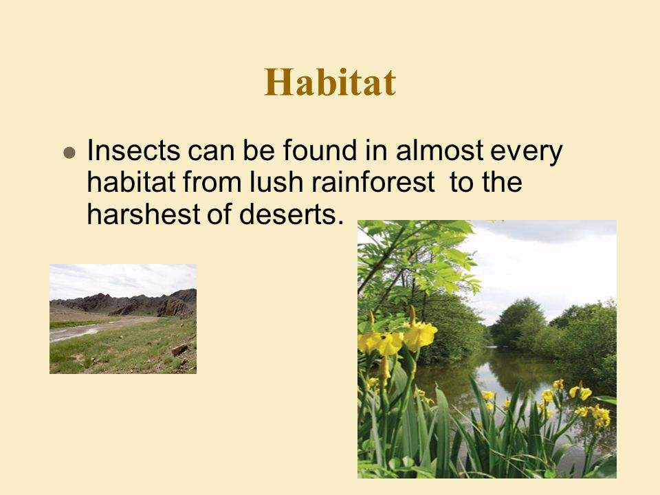 Habitat Insects can be found in almost every habitat from lush rainforest to the harshest of deserts.